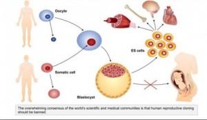 human-reproductive-cloning-sm