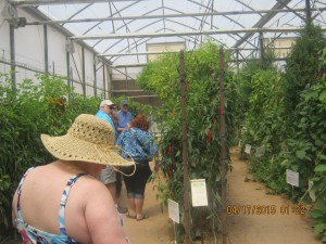 Vines of hot peppers; of tomatoes; of hanging water melons, of strawberries; in very limited space raising super abundant crops